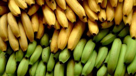 O ciupercă ucigătoare face ravagii! Bananele din întreaga lume sunt în pericol de dispariție