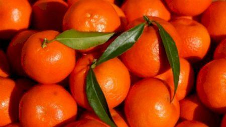 Cine a inventat clementinele? Secretul neștiut al celui mai consumat fruct al sezonului