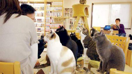 Chiar există! Cafeneaua cu pisici: cum scapi de energia negativă