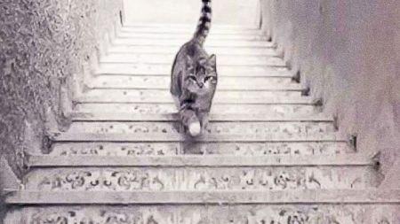 Test de personalitate. Ce vezi: pisica urcă sau coboară scările? Află ce spune asta despre tine