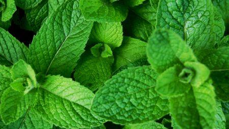 Planta minune, care te ajută să slăbești doar dacă o miroși! Se găsește peste tot în România