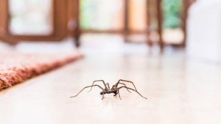 De ce nu trebuie să ucizi păianjenii din casă? Specialiștii avertizează! Ce rol au