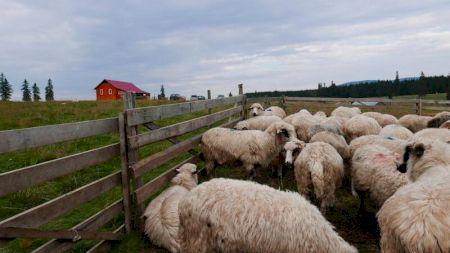 Un cioban a ajuns ministru în România! A declarat că are 43 de oi