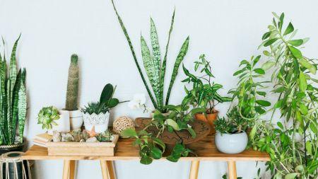 Cele trei plante minune care te ajută să slăbești. Nu trebuie să lipsească din dieta ta. Cum trebuie să le consumi