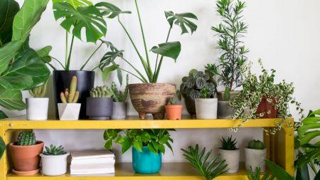 Planta care nu trebuie să-ți lipsească din casă! E obligatoriu. E o minune pentru sănătate
