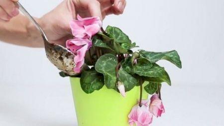 Cum salvezi de la ofilire plantele din apartament? Iată ce trebuie să faci ca să le ajuți imediat
