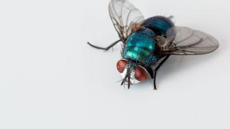 Scapă de muște folosind aceste trei trucuri. Sunt naturale și acționează imediat
