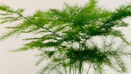 Cum conservi corect pentru iarnă mărar verde și leuștean? Iată care sunt cele mai bune metode