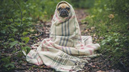 Suferi de COVID-19 sau de gripă? Iată cum îți dai seama: Fii atent la aceste indicii