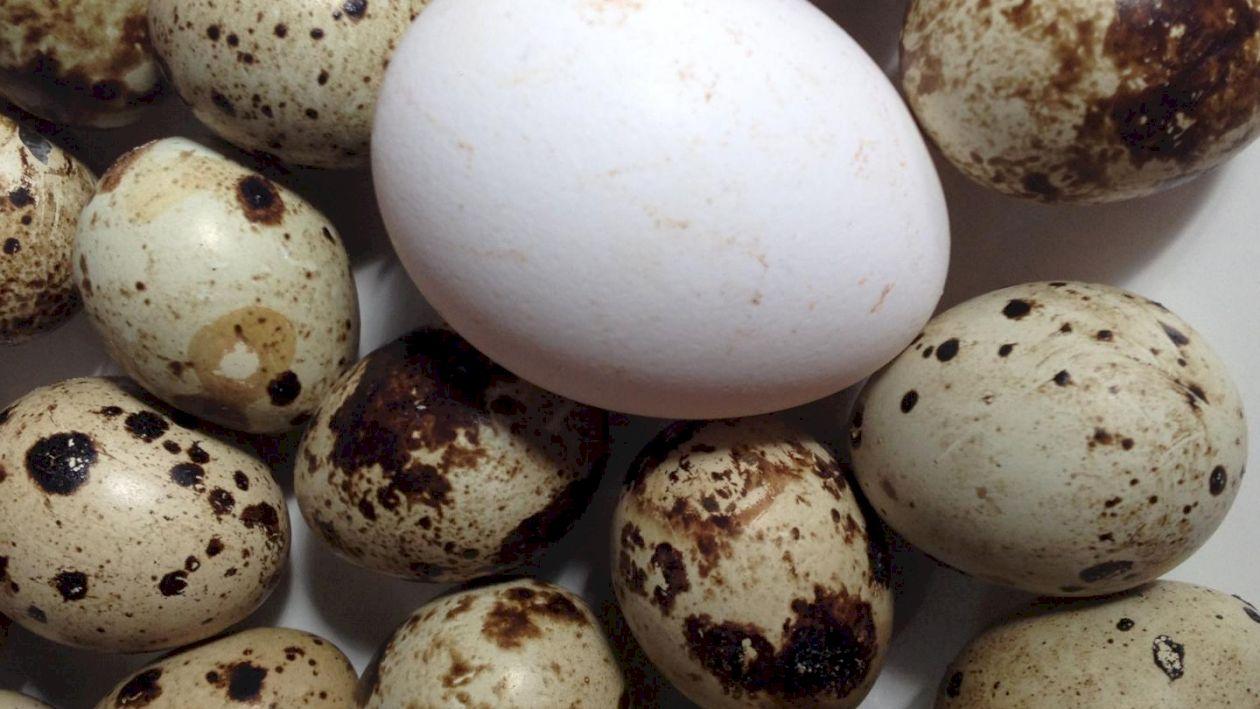 Care este cel mai sănătos tip de ou. Puțini știu ce afecțiuni pot vindeca și ce beneficii au asupra organismului