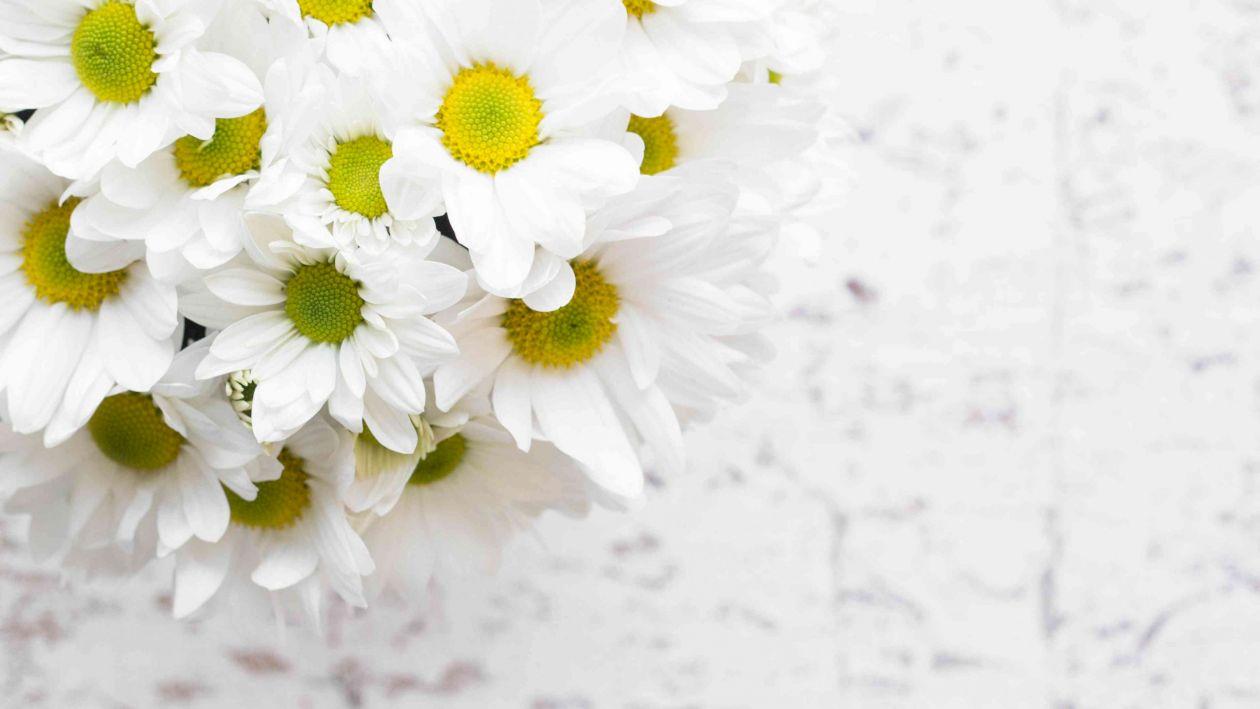 Ai visat flori? Ce semnifică culoarea acestora și ce înseamnă florile uscte într-un vis. Pot prevesti mai multe situații