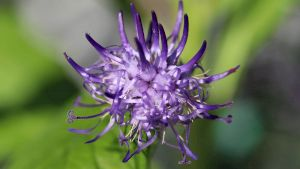 Ai dureri de spate? Planta care elimină rapid afecțiunile inflamatorii. Este recomandată și în diete