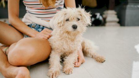 Cum poți să verifici dacă un câine este sau nu de rasă?